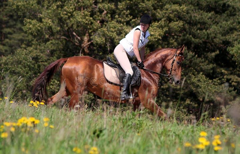 Chemin de cheval de source photographie stock