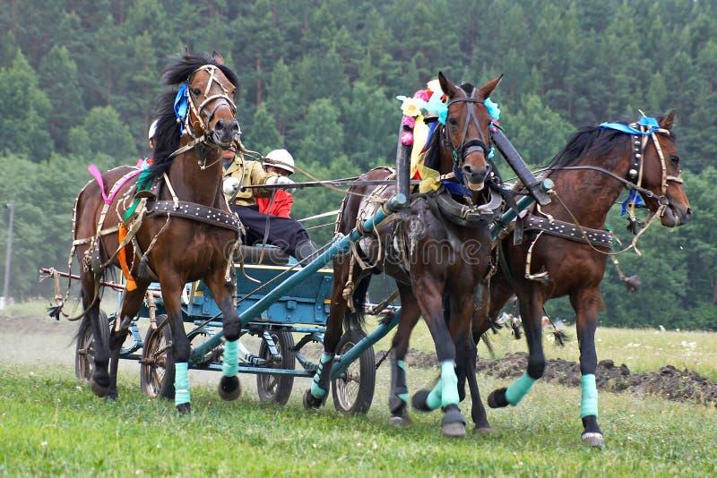 Chemin de cheval. Trois chevaux dans le harnais photos libres de droits