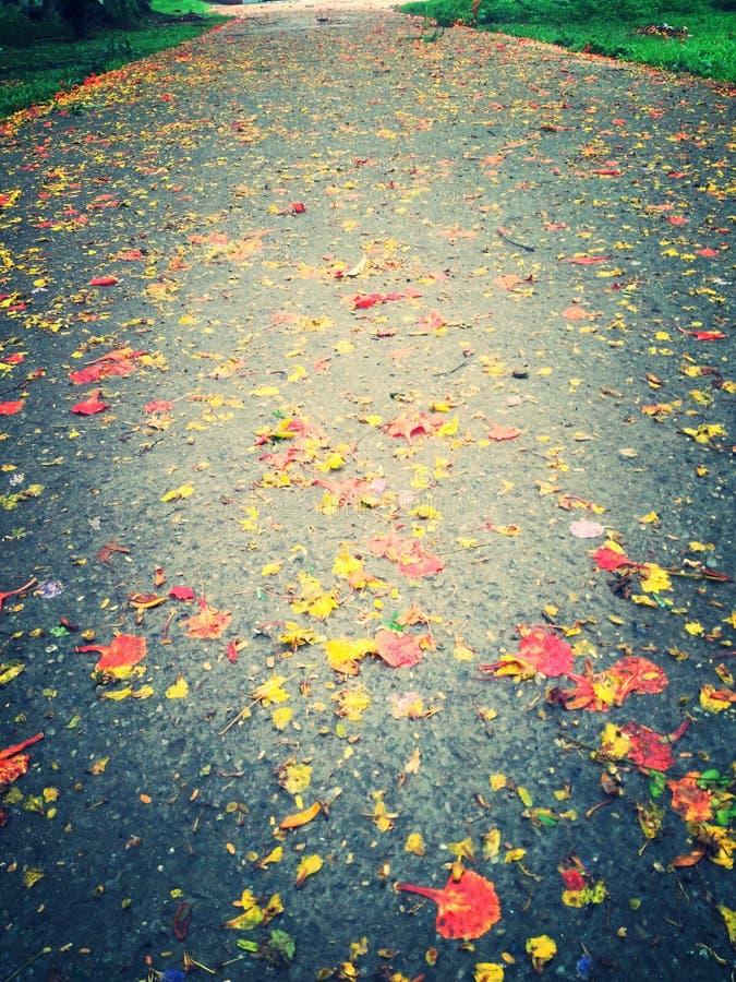 Chemin de ciel photo libre de droits