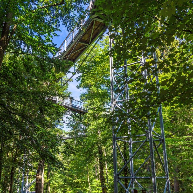 Chemin de cime d'arbre à travers la forêt mélangée au bord du nord du Harz, vue de dessous aux appuis et aux planches en bois photo libre de droits