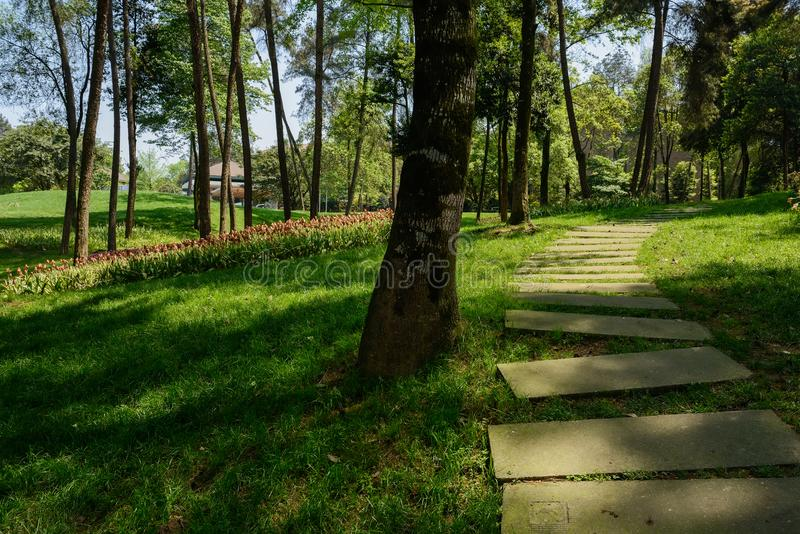 Chemin de dalle dans la pelouse ombragée la journée de printemps ensoleillée images libres de droits
