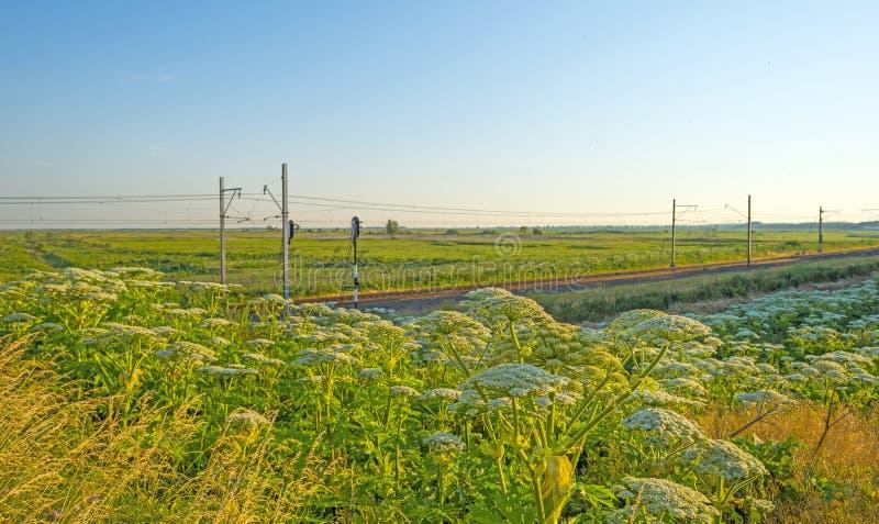 Chemin de fer par la nature photographie stock