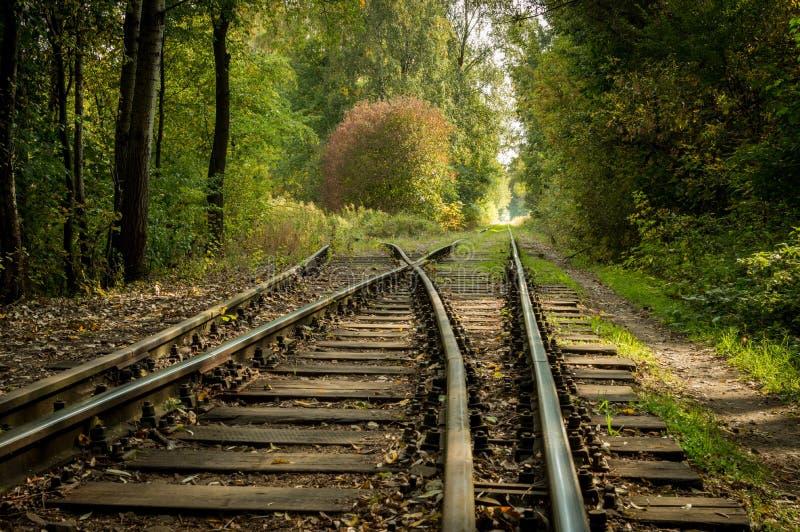 Chemin de fer sans fin dans la forêt photographie stock libre de droits
