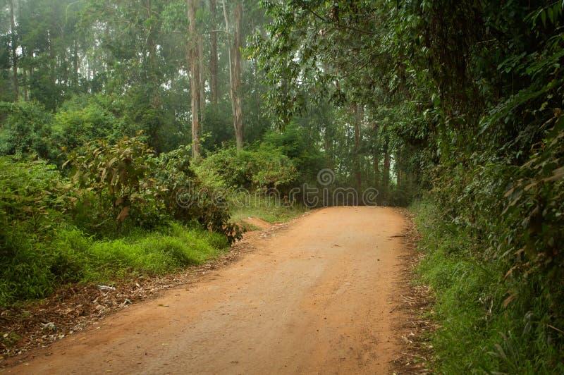 Chemin de forêt tropicale photos libres de droits
