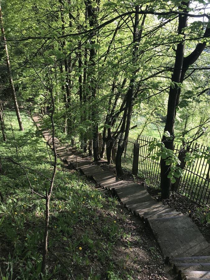 Chemin de Forst photo stock
