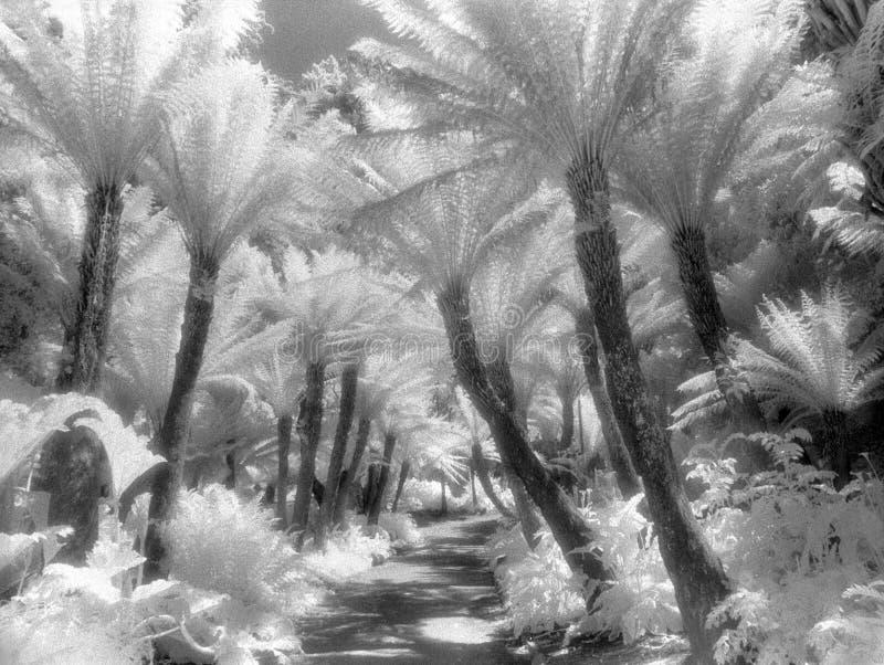Chemin de fougère dans l'infrarouge photo stock