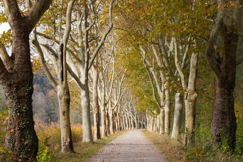 Chemin de gravier garni des arbres en automne photographie stock