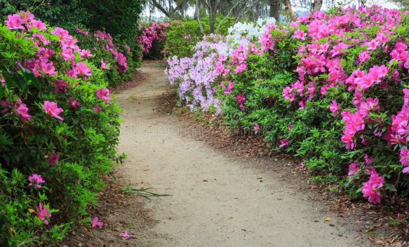 Chemin de jardin à travers des azalées photos stock