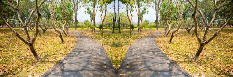 Chemin de jardin avec des plantes tropicales et des arbres photos libres de droits