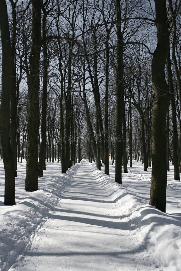 Chemin de l'hiver images stock