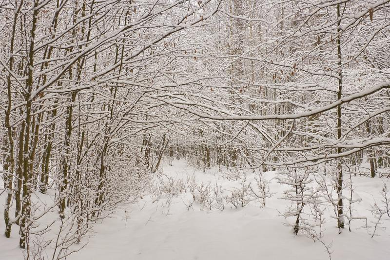 Chemin de la neige de la forêt après photographie stock