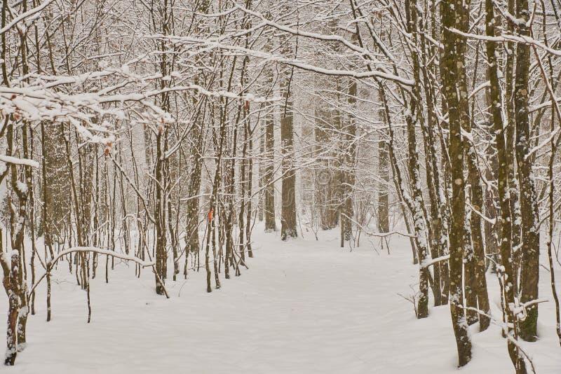 Chemin de la neige de la forêt après image libre de droits