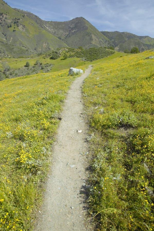 Chemin de marche à travers des fleurs de source photo libre de droits