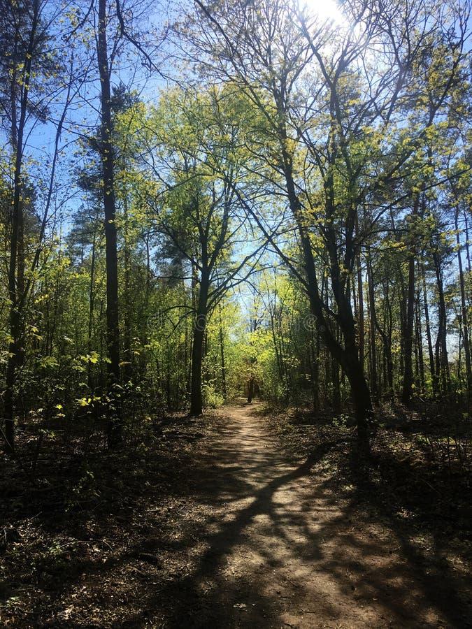 Chemin de marche dans la forêt légère avec la lumière du soleil tachetée images libres de droits