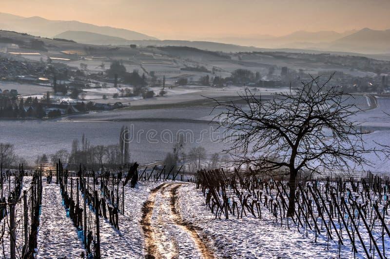 Chemin de marche dans les vignobles images libres de droits