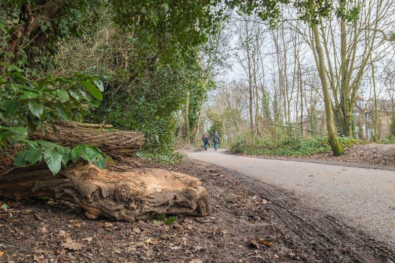 chemin de marche fait en vieux goudron en parc photo libre de droits