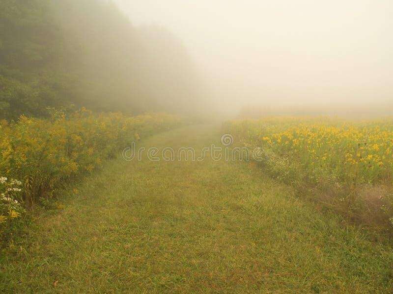 Chemin de mystère photo libre de droits