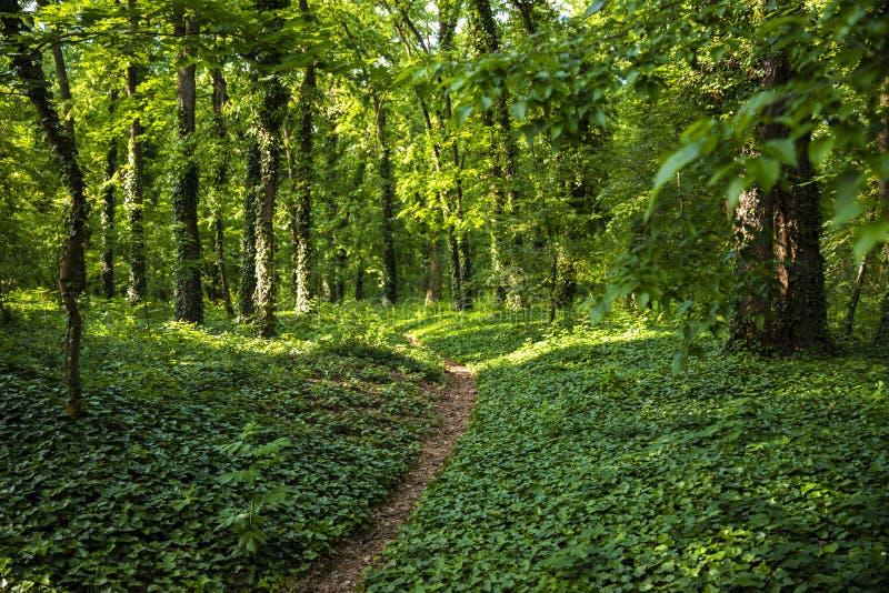 Chemin de Naturan fait dans la belle forêt en bois verte images libres de droits