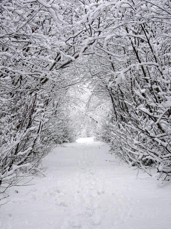 Chemin de neige photo libre de droits