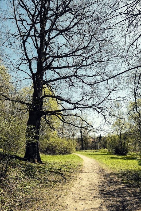 Chemin de parc photos libres de droits