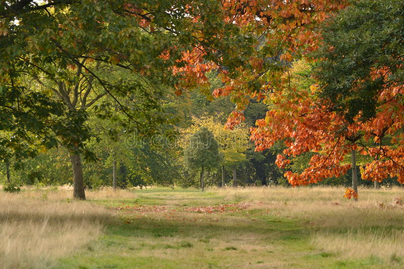 Chemin de parc d'Autumn London photographie stock
