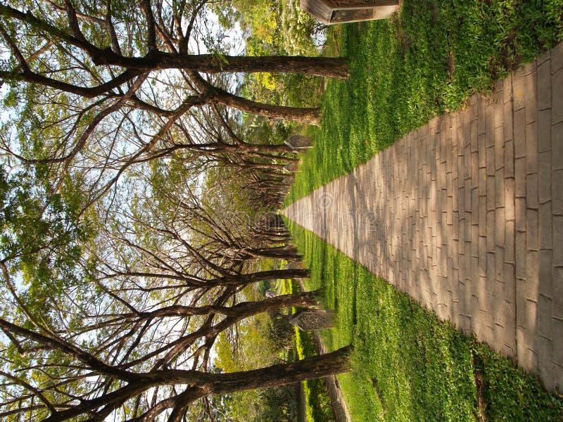 Chemin de passage couvert d'infini de jardin photos stock