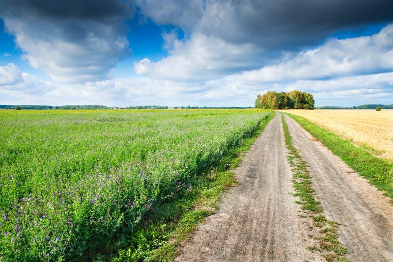 Chemin de pays entre les champs photographie stock