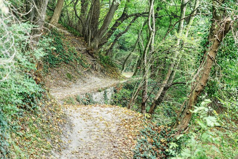 Chemin de pied dans la forêt photographie stock