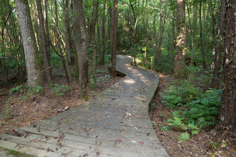 Chemin de promenade à travers les bois photos libres de droits