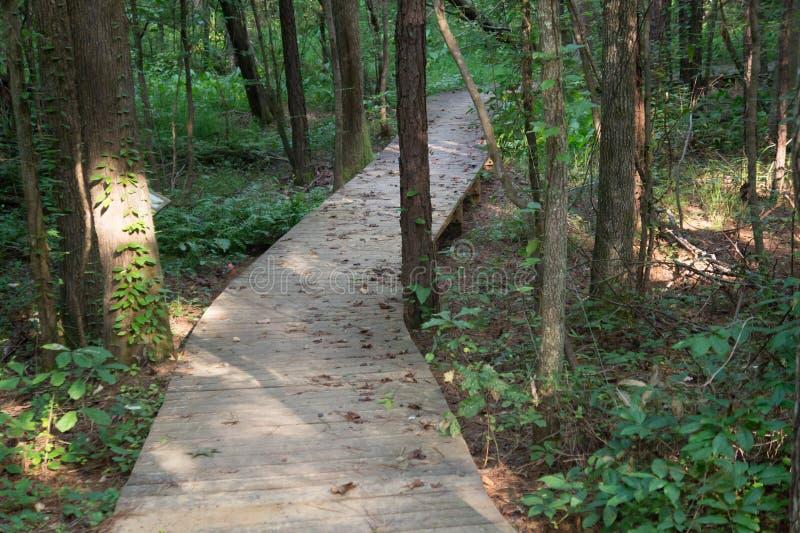 Chemin de promenade à travers les bois photo stock