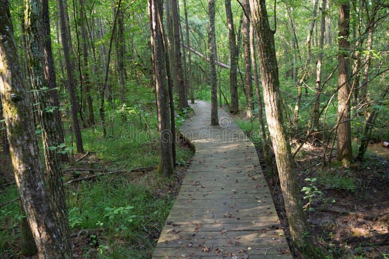 Chemin de promenade à travers les bois image stock
