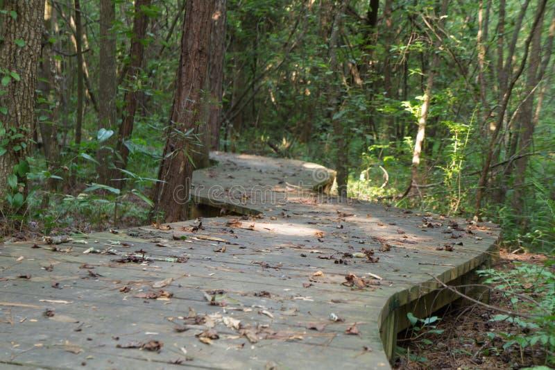Chemin de promenade à travers les bois image libre de droits