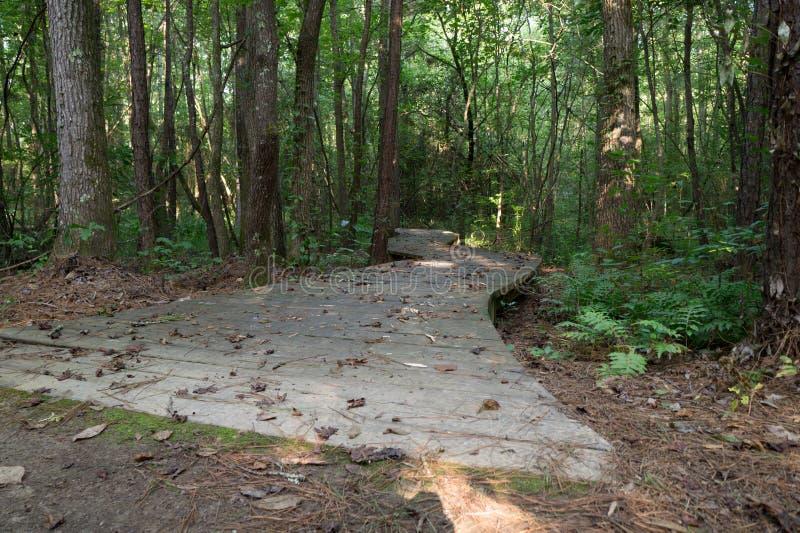 Chemin de promenade à travers les bois photographie stock libre de droits
