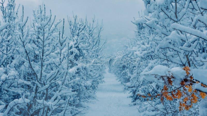 Chemin de promenade d'hiver photos libres de droits