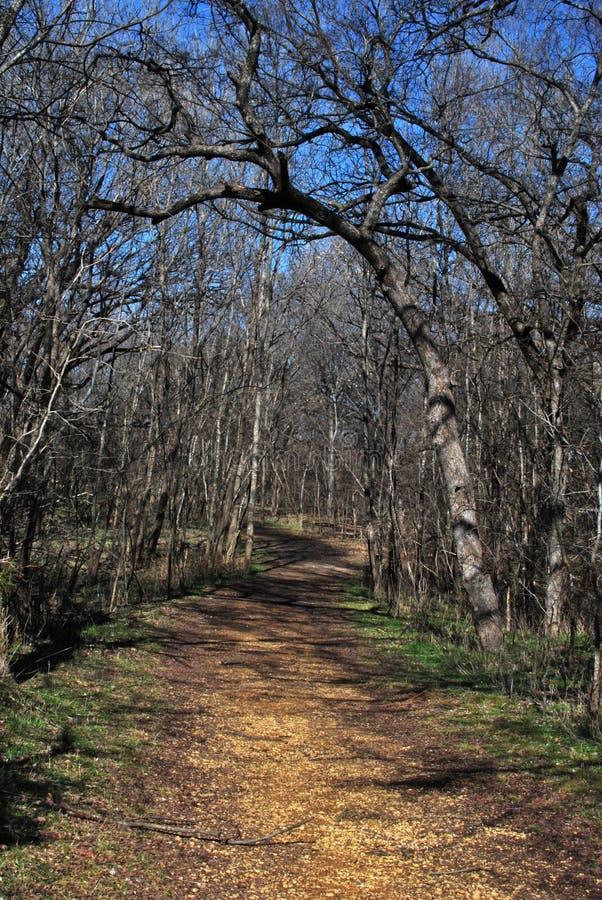 Chemin de régfion boisée en hiver photographie stock libre de droits