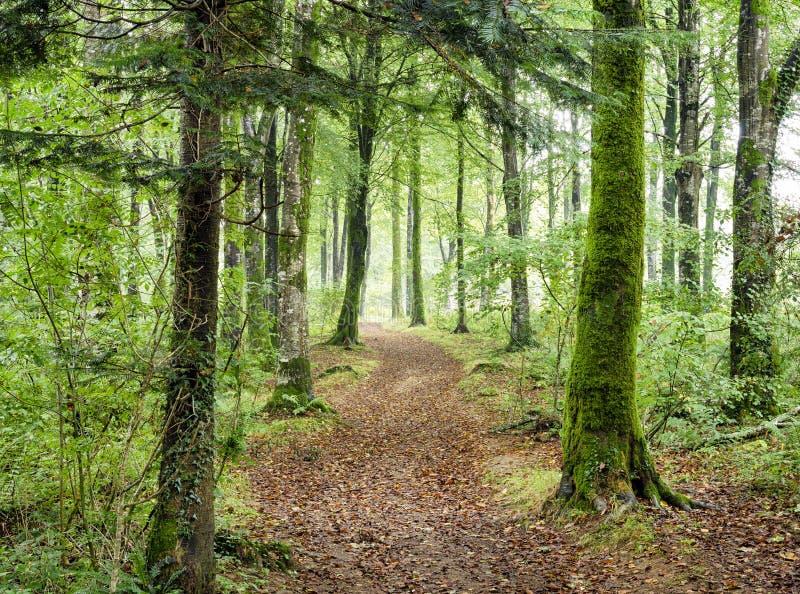 Chemin de région boisée images stock