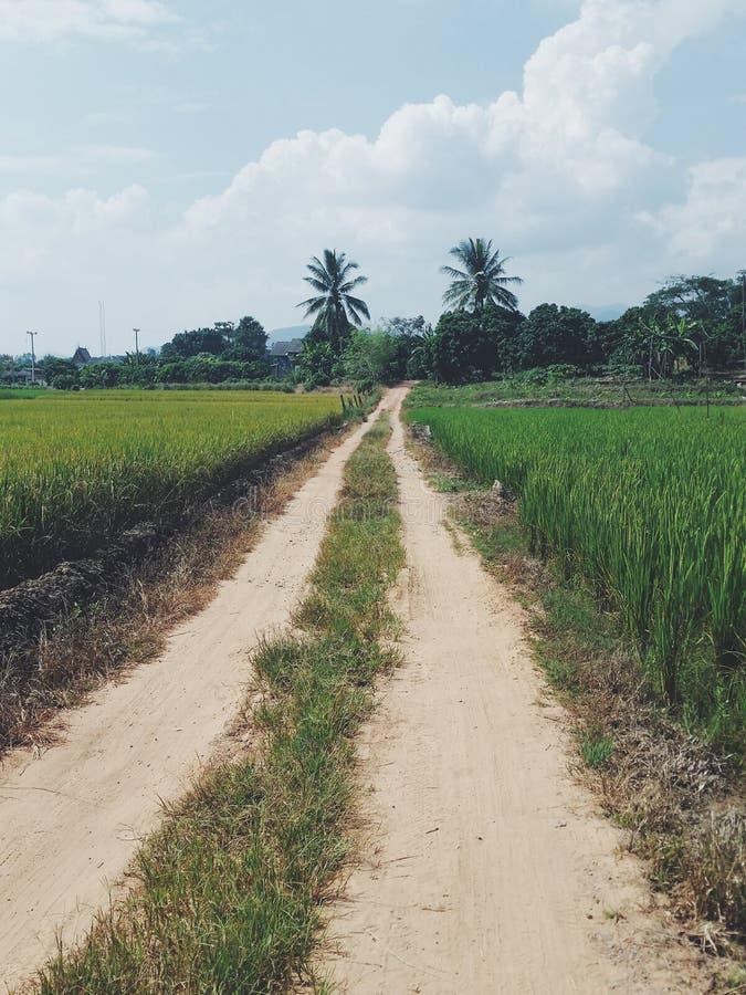 Chemin de riz photos libres de droits