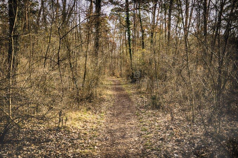 Chemin de ruelle de passage couvert avec des arbres en Forest Beautiful Alley, route dedans photos stock