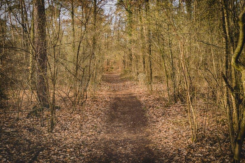 Chemin de ruelle de passage couvert avec des arbres en Forest Beautiful Alley, route dedans images stock