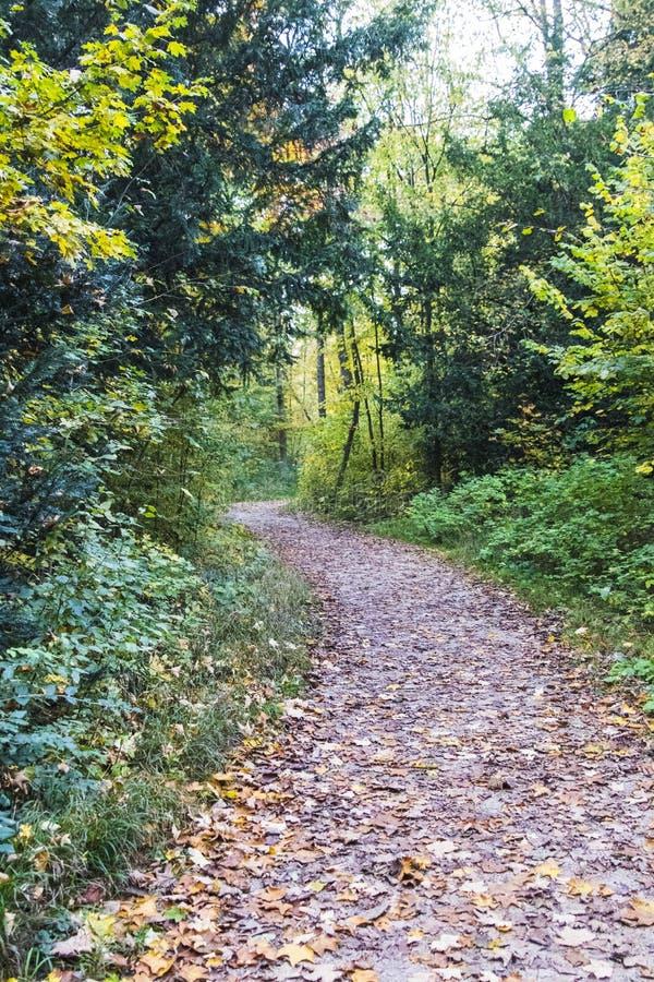 Chemin de ruelle de passage couvert avec les arbres verts en Forest Beautiful Alley, r photographie stock