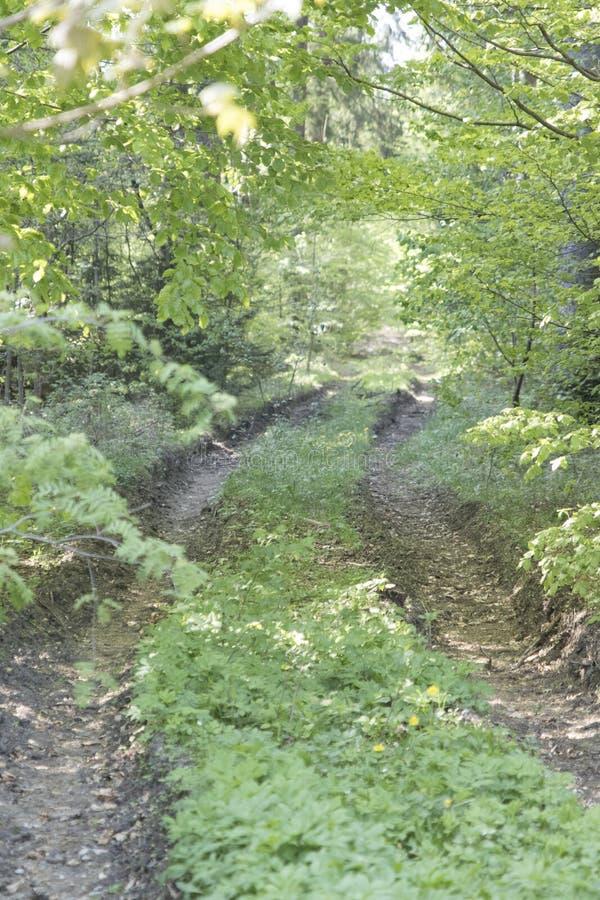 Chemin de ruelle de passage couvert avec les arbres verts en Forest Beautiful Alley, r images stock