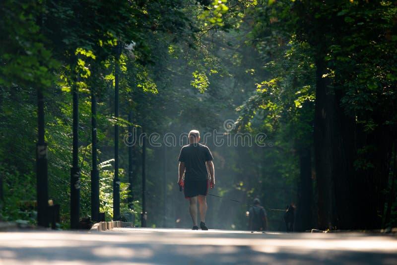 Chemin de ruelle de passage couvert avec les arbres verts en parc de ville Belle all?e en parc photos libres de droits