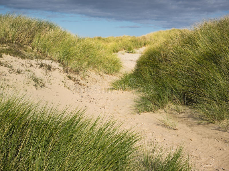 Chemin de sable à travers l'herbe dunaire photo stock