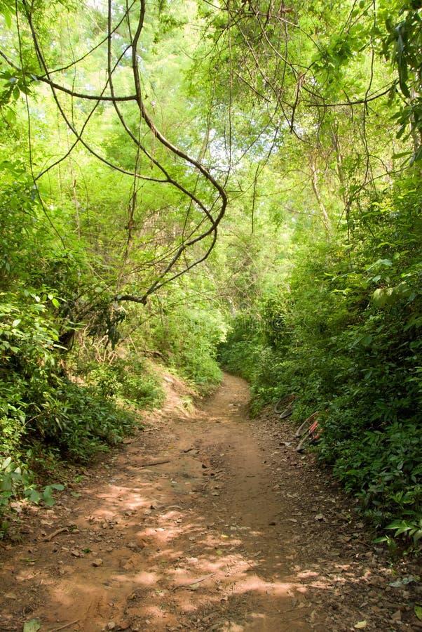 Chemin de saleté dans la jungle image stock