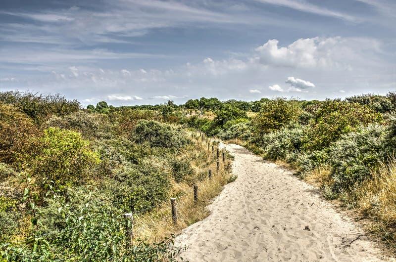Chemin de Sandy dans les dunes photo libre de droits