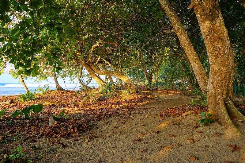 Chemin de Sandy sous des arbres le long de côte tropicale image stock