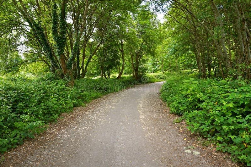 Chemin de terre avec des arbres en Irlande images libres de droits