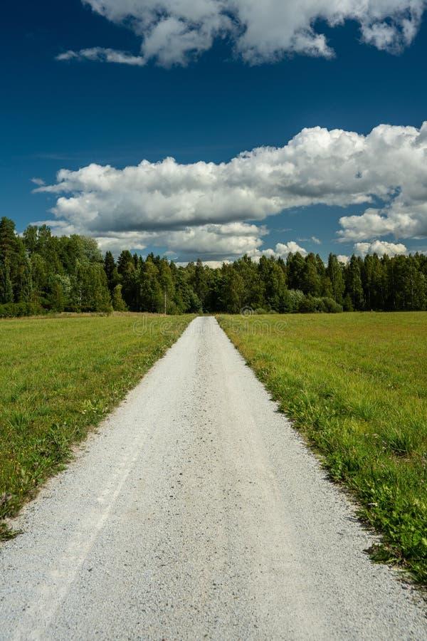 Chemin de terre blanc menant dedans à la forêt verte dans le sunshin lumineux photos stock