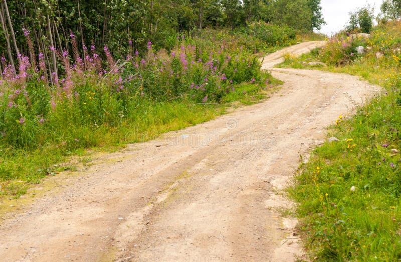 Chemin de terre de champ le long de la forêt en été, Russie photographie stock libre de droits