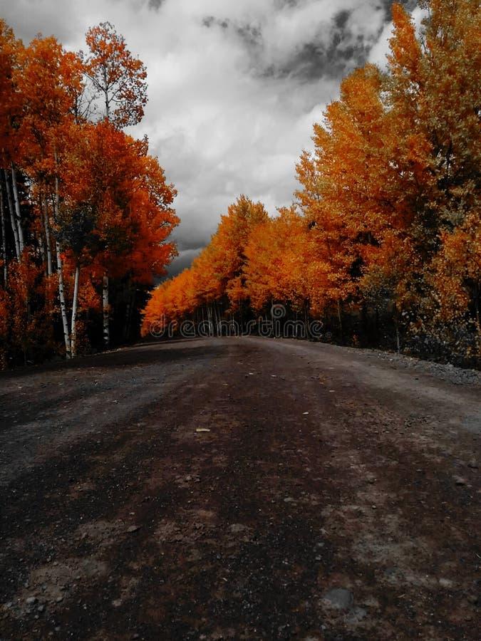Chemin de terre de chute photographie stock libre de droits